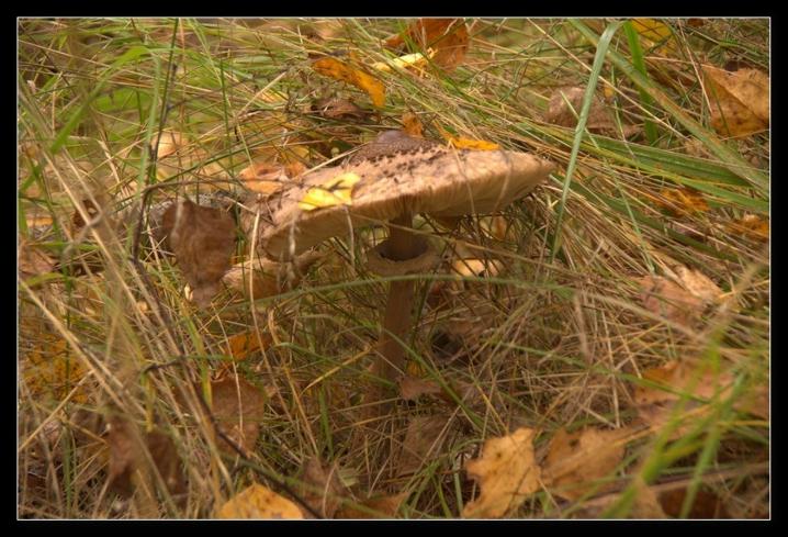 Персональный сайт по грибы в роще у
